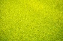 OEM Obdélníkový koberec Eton Zelená 57 x 120 cm