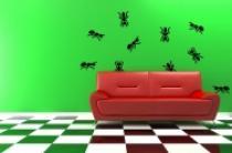 Samolepky na zeď - Mravenci