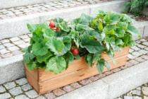 BB Zahradní truhlík 64cm