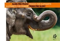Ptačinská Jirátová Jana, Bobek Miroslav: Sloni pro Prahu - Praha pro slony Elephants for Prague - Prague for Elephants (ČJ, AJ)