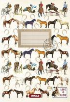 Infoa Notýsek - Lidé a koně
