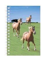 Abc Develop Deníček - Úžaska - Koně