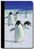 Abc Develop Deníček - Úžaska - Tučňáci