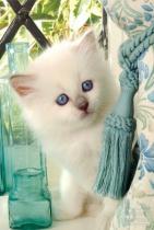 SCHMIDT Kočka Florice