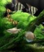 Spiral Monkey Software Dream Aquarium
