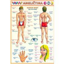 Obrázková angličtina-lidské tělo
