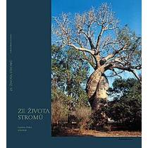 Ze života stromů
