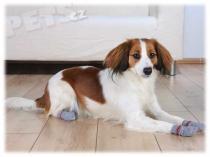 TRIXIE protiskluzové S Ponožky
