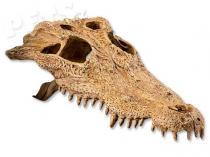 Hagen Dekorace EXO TERRA krokodýlí lebka