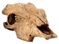 Hagen Dekorace EXO TERRA bůvolí lebka