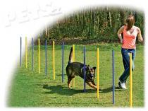 Dog Fantasy Slalom Agility