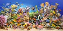 CASTORLAND 4000 dílků - Podmořský život