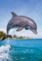 CASTORLAND 500 dílků - Delfín