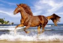 CASTORLAND 500 dílků - Kůň na pláži