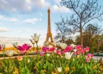 RAVENSBURGER 1000 dílků - Tulipány u Eiffelovy věže