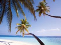 RAVENSBURGER 500 dílků - Palmy na pláži