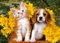 CASTORLAND 108 dílků - Štěně a kotě