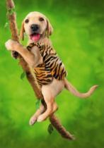 DINO 500 dílků - Pes akrobat