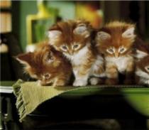 HEYE 1000 dílků - Kočky, Lena, Linus a Lulu