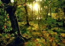 HEYE 1000 dílků - Magický les: Mýtina v lese
