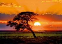 HEYE 1000 dílků - Strom v záři slunce