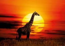 HEYE 1000 dílků - Žirafa v záři slunce