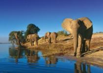HEYE 1000 dílků - Žízniví sloni