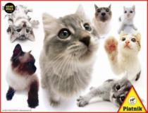 PIATNIK 100 dílků - Kočky - HANADEKA