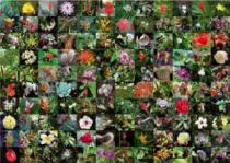 PIATNIK 1000 dílků - Květy