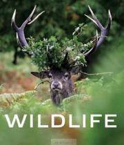 AB Art press Wildlife