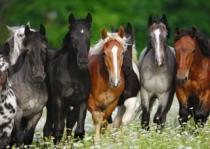 DINO 1000 dílků - Koně na louce