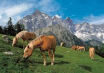DINO 1500 dílků - Koně v horách