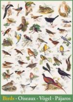 EUROGRAPHICS 1000 dílků - Ptáci