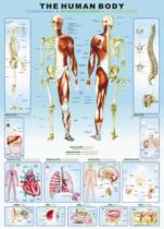 EUROGRAPHICS 1000 dílků Lidské tělo