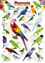 EUROGRAPHICS 1000 dílků Papoušci
