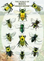 EUROGRAPHICS 1000 dílků : Včely