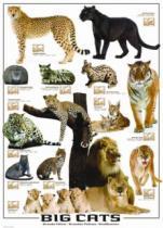 EUROGRAPHICS 1000 dílků : Velké kočky