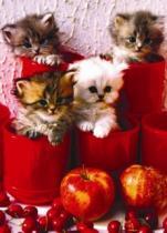 EUROGRAPHICS 1000 dílků : Koťata v květináčích