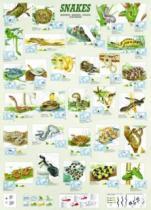 EUROGRAPHICS 1000 dílků : Hadi