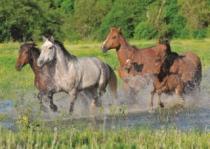 DINO 1000 dílků - Stádo koní