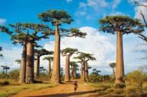 CLEMENTONI 1000 dílků - Madagaskar
