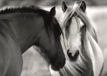 DINO 1000 dílků - Koňská láska