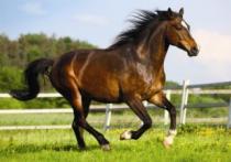 DINO 500 dílků - Kůň ve výběhu