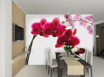 1Wall Orchidej 315x232