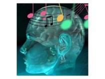 AWA Brno EEG vstupní vyšetření STANDARD