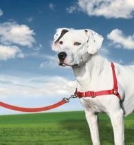 Easy Walk pro psa - červená