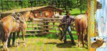 Lowlands Album na samolepky koně