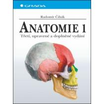 Anatomie 3.