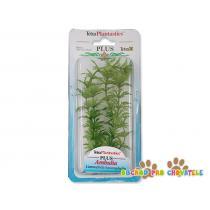 Rostlina Ambulia Plus 15 cm