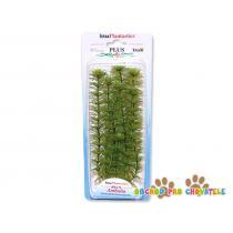 Rostlina Ambulia Plus 23 cm
